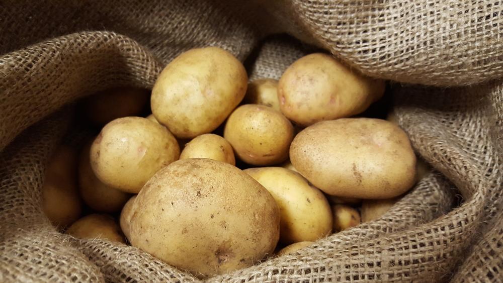 Curingpotatoes.jpg