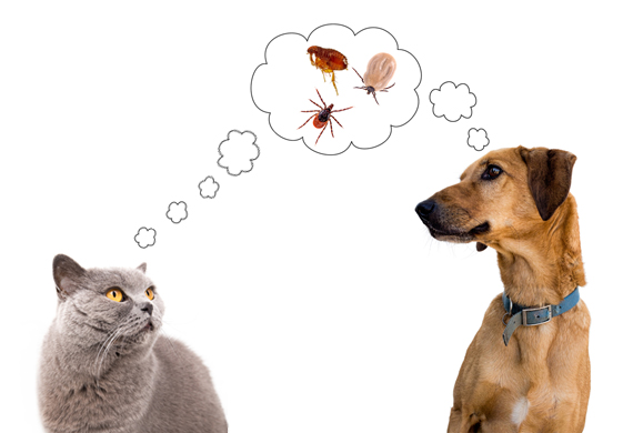 1-flea-tick-mistakes-479676896.jpg