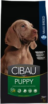 CIBAU_Puppy_Maxi_12.jpg