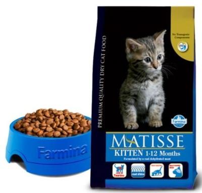 Matisse_Kitten_1-12_Months.JPG