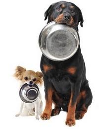 alimentation.chien.jpg
