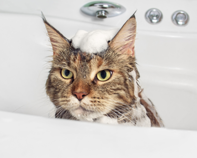 best-cat-shampoo-1.png